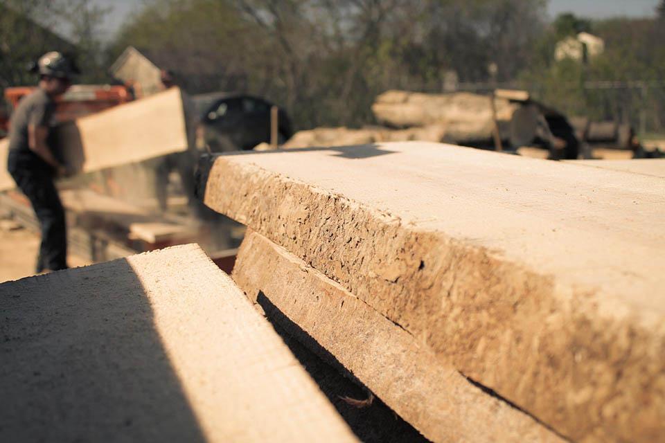 Sciage du bois par Frêne Urbain